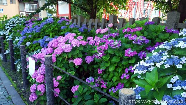 六孫王神社 紫陽花