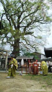 新熊野神社大樟祭