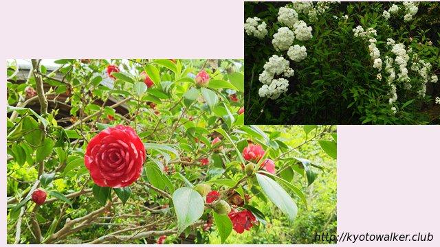大豊神社の花々