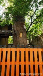 熊野神社むくの木