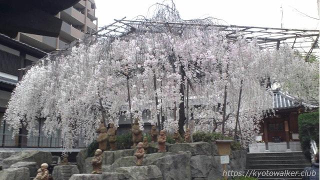 六角堂2012年の桜