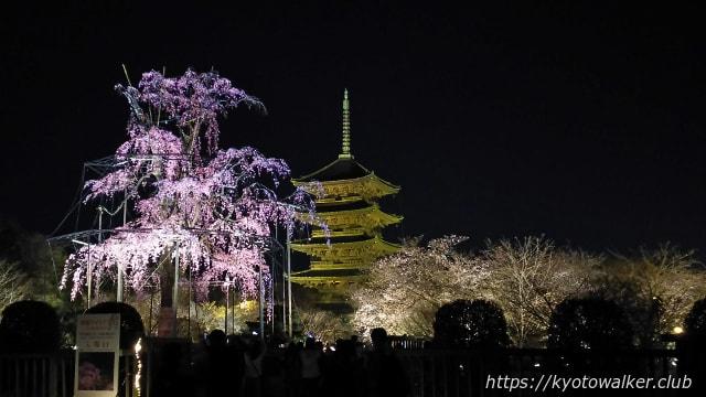 東寺夜桜20170404−7
