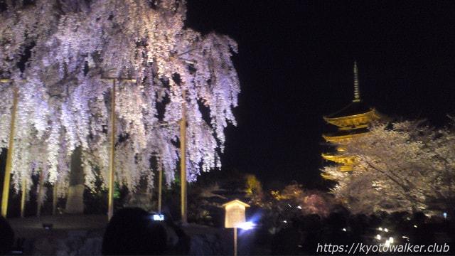 20130331東寺夜桜