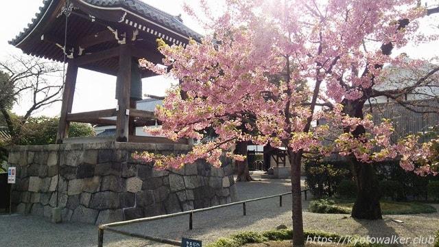 20150322東寺-河津桜
