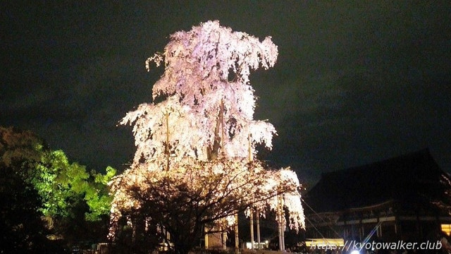 20150402東寺夜桜