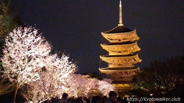 201604東寺夜桜
