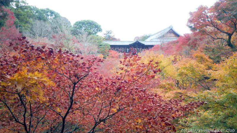 東福寺 臥雲橋から 20191128