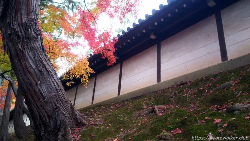 東福寺 紅葉と築地壁 20191128