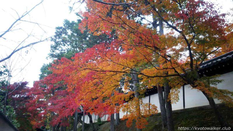 東福寺 築地壁と紅葉 20191128