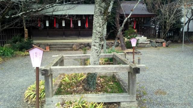 平野神社 桜「衣笠」