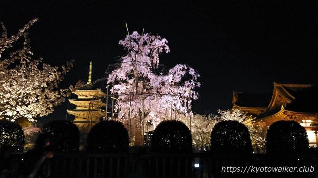 東寺20180328不二桜と五重塔