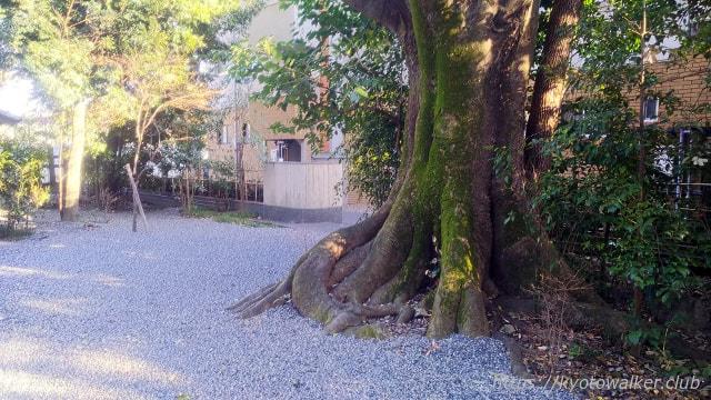 西院野々宮神社巨木