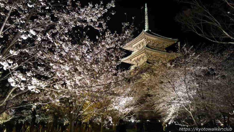 東寺 夜桜拝観 20190404