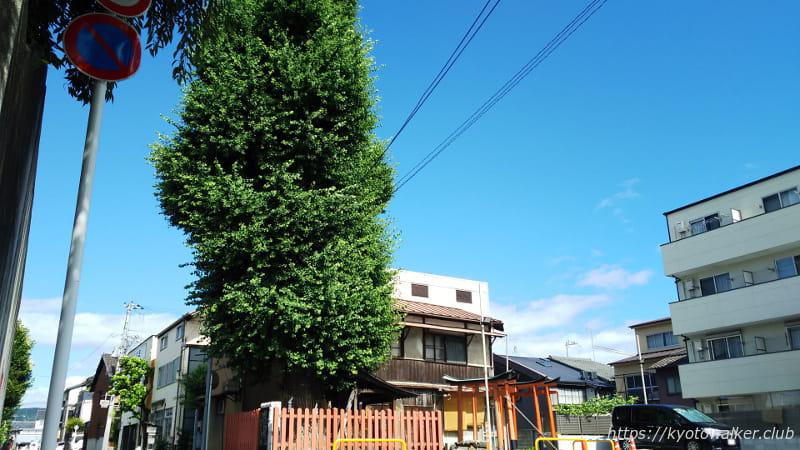 島原住吉神社境外社と大銀杏