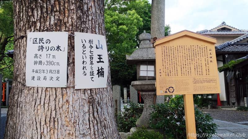 山王神社の山王楠と駒札