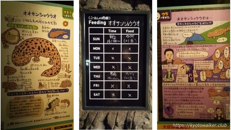 京都水族館オオサンショウウオ説明の展示