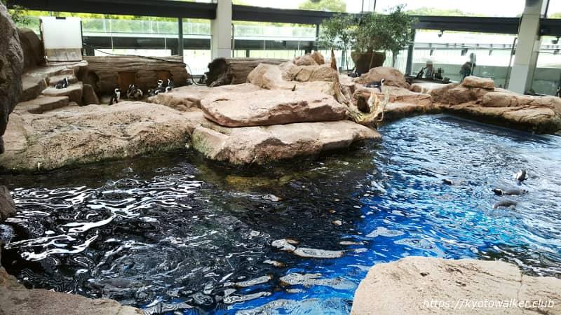 京都水族館ペンギンゾーン