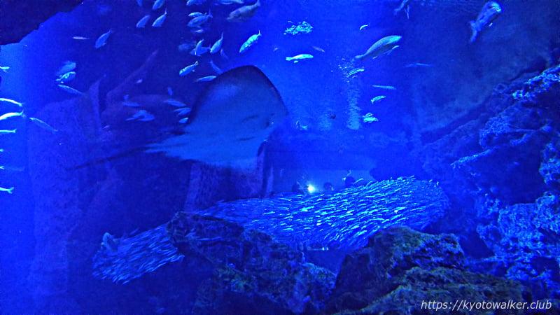 京都水族館 京の海コーナー メインタンク
