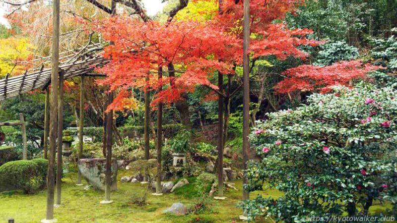 新善光寺 山門の中の紅葉と桜