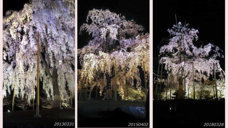 東寺不二桜2013−2018