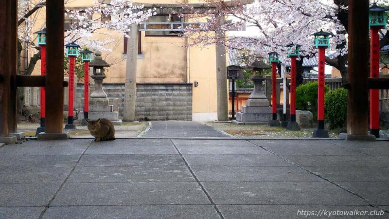 宇賀神社 本殿側から見た拝殿と猫