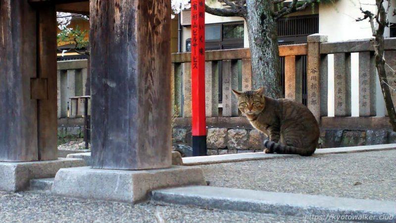 宇賀神社 拝殿と猫