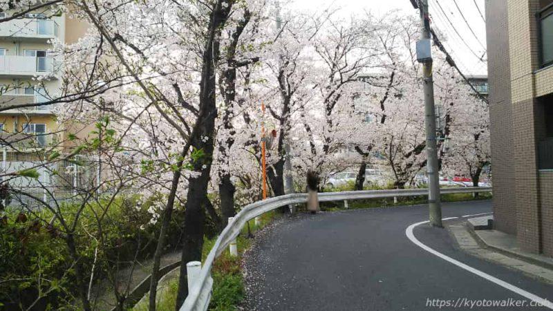 嚴嶌神社 周辺の桜 20190407