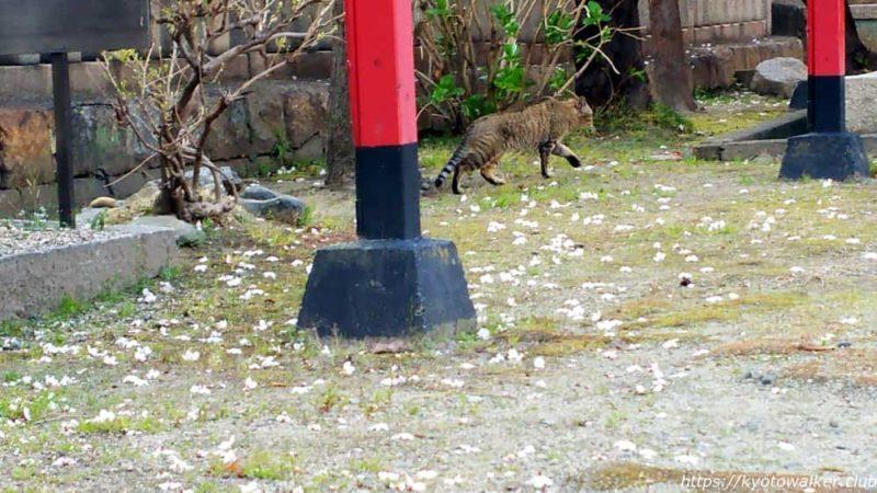 宇賀神社境内 猫