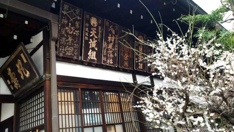 京都大神宮 梅 20190303