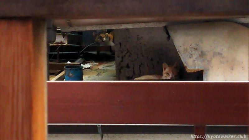 誓願寺横にいた猫
