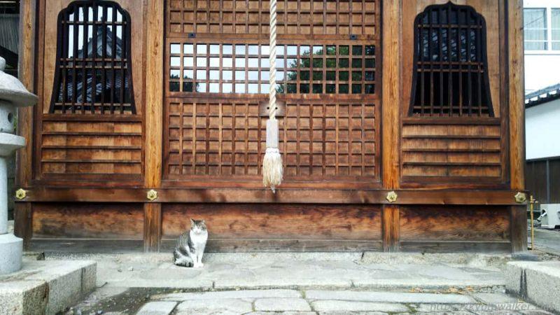 革堂(行願寺) 猫と鎮宅霊符神堂 20190610