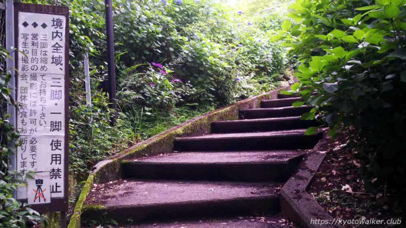 真如堂裏 紫陽花と階段 20190623