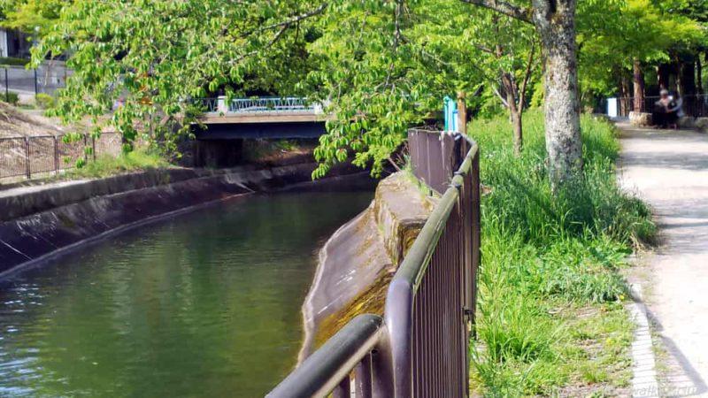 琵琶湖疏水沿い 20190505