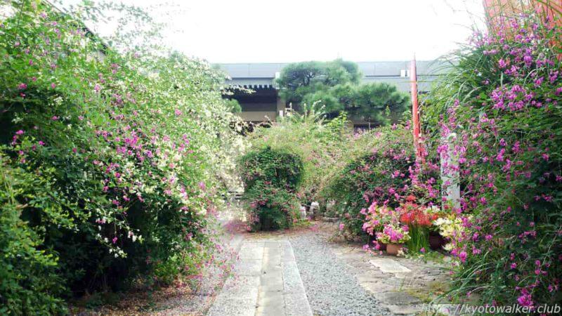 勝念寺 境内の萩振舞 20190929