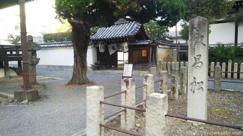 本法寺 叡昌松と尊陽院山門 2020102
