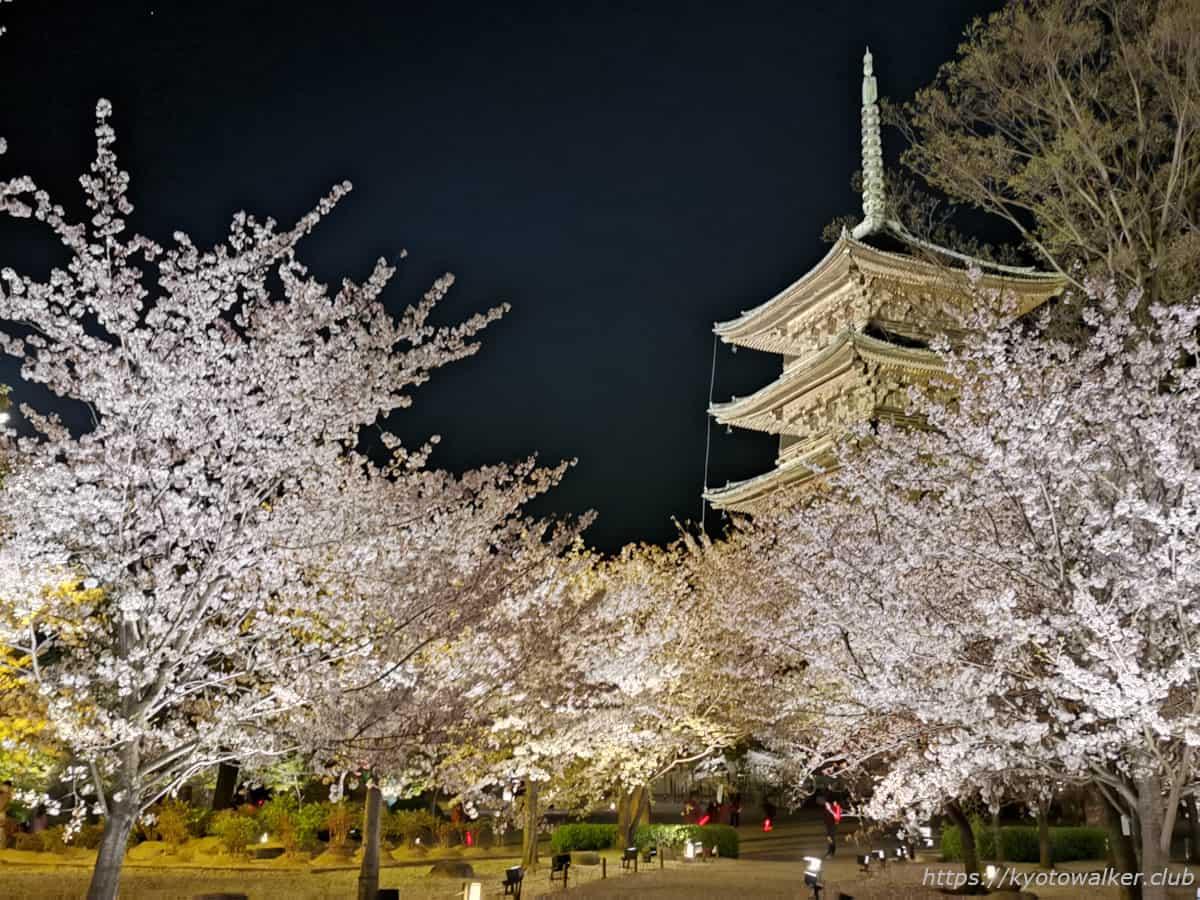 東寺 金堂辺りから見た五重塔 20210331