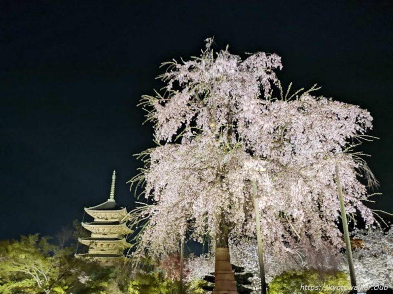 東寺 不二桜と五重塔 20210331